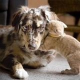 12 chats qui aiment les chiens et l'assument !