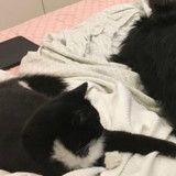 Ce chat et ce chien sont les rois de la bagarre (Vidéo du jour)