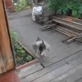 Elle demande à son chien de ramener le chat à la maison, la vidéo est vue des millions de fois