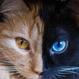 Voilà Quimera, une chatte totalement incroyable qui va vous en mettre plein les yeux (Photos)