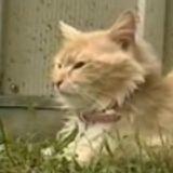 Elle entend des cris et n'en croit pas ses yeux quand elle voit ce que son chat a dans la gueule