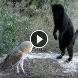 Si ce chat veut attraper cette chouette, ce n'est pas pour la manger… (Vidéo du jour)