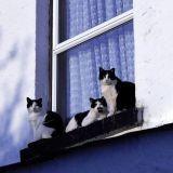 Mon chat est tombé du balcon, au secours !