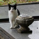 Chaque jour, ce chat dépose des offrandes sur la tombe de son maître