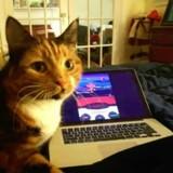 Son chat s'allonge sur son clavier, appuie sur des touches… et gagne quelque chose d'incroyable !
