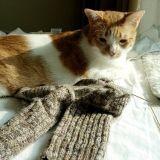 Un chat cleptomane !