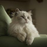 La climatisation est-elle dangereuse pour les chats ?