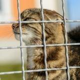 Ils retrouvent leur chatte pendue à quelques mètres de chez eux