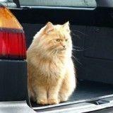 Comment voyager en voiture avec son chat ?