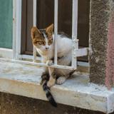 Elle lance une pétition pour sauver son chat coincé dans son appartement après l'effondrement d'un immeuble
