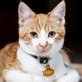 Vacances d'été : collier ou harnais, que choisir pour sortir mon chat?