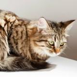 Top 10 des choses qu'il ne faut surtout pas faire avec son chat