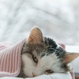 Le coryza chez le chat : symptômes, prévention et traitements
