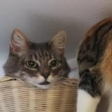 Cette photo d'un chat « coupé en 2 » a laissé les Internautes perplexes