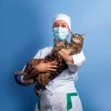Covid-19 et le chat : quels sont les risques pour mon animal et moi ?