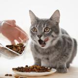 Quelles sont les meilleures croquettes digestion pour chat sensible en 2021 ?