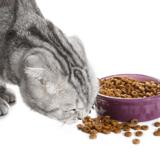 Quelles sont les meilleures croquettes peau sensible pour chat en 2021 ?
