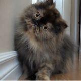 Un chat très curieux, une scène adorable (Vidéo du jour)