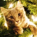 Le chat et les dangers de Noël