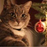 5 conseils pour protéger votre chat des dangers de Noël