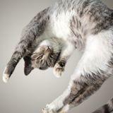 Une prof de danse filme un cours en ligne : son chat arrive et la situation dérape totalement !