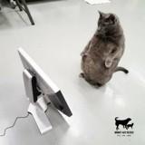 Ce chat se tient debout pour réclamer des friandises, ses photos font le tour du monde