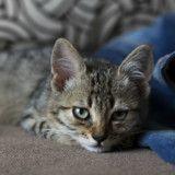 Mon chat est dépressif, comment l'aider ?