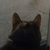 Elle entend un chat miauler devant sa porte, deux semaines plus tard un miracle se produit