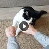 Incroyable ! Ce chat est un véritable devin (Vidéo du jour)