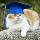 Cet étudiant a posé avec son chat pour ses photos de remise de diplôme