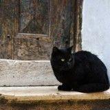 10 ans après sa disparition, un chat gratte à nouveau à la porte de ses maîtres !