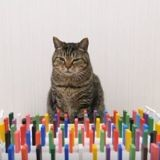 Cette vidéo de chats qui font tomber des dominos va vous en mettre plein les yeux