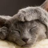 10 chats qui donnent vraiment trop envie d'être en week-end