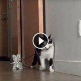 Ce chat promène sa peluche en laisse !