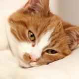 La douleur chez le chat : comment savoir si mon animal a mal  ?