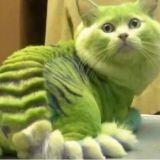 Transformer son chat en insecte ou en dragon : la nouvelle mode russe
