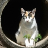 Une femme trouve un chaton dans les égouts : aujourd'hui il vaut 10 millions d'euros !