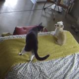 Quand un chat fait du dressage de chien… (Vidéo du jour)