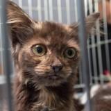 Alerte Coronavirus : un chat soupçonné d'être infecté va être expulsé en Chine !