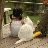 8 races de chats adaptées aux enfants