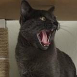 Ce chat à un ennemi juré, et vous ne devinerez jamais qui c'est ! (Vidéo du jour)