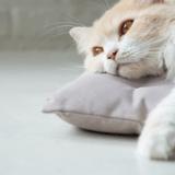 Comment savoir si mon chat s'ennuie ?