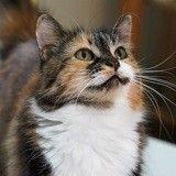 Entretenir son chat : 5 conseils pour le bien-être et la santé de votre félin