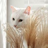 Mon chat a un épillet : que faire et comment les éviter ?