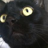 Un chat perdu retrouvé à 300 km de chez lui, à l'autre bout du pays