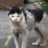 Dans un état lamentable, ce chat errant supplie une femme de l'aider... (Photos)