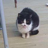 Ils sauvent un chat sauvage en piteux état, 8 mois plus tard il est métamorphosé