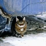 Comment aider les chats errants à affronter l'hiver ?