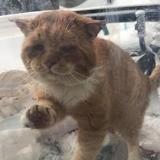 En plein hiver, un chat en détresse gratte à sa fenêtre, elle comprend qu'elle a très peu de temps pour agir