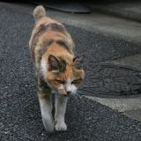 2 millions de chats australiens seront exterminés avant 2020 !
